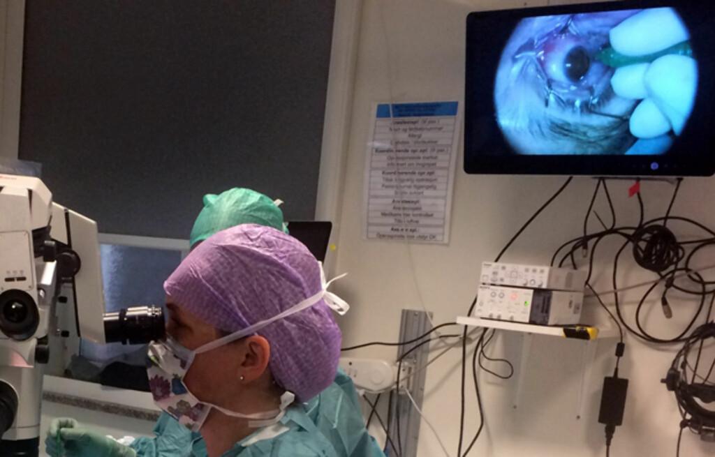 NETTHINNELØSNING: Kirurg dr. Bober ved netthinneseksjonen på Ullevål operer en pasient for netthinneløsning. Foto: Overlege Thomas P. Bærland