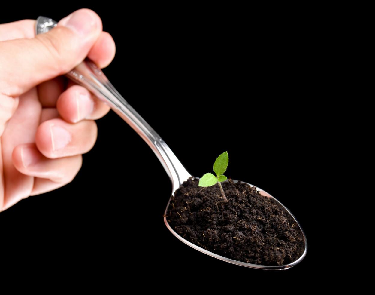 PICA: Hvis du for lyst til å spise merkelige ting som ikke er mat, har du pica. Dette kan være for eksempel jord, sand, maling, hårballer, papir, skitt, dyreavføring eller andre ting som du ikke bør spise. Foto: Shutterstock