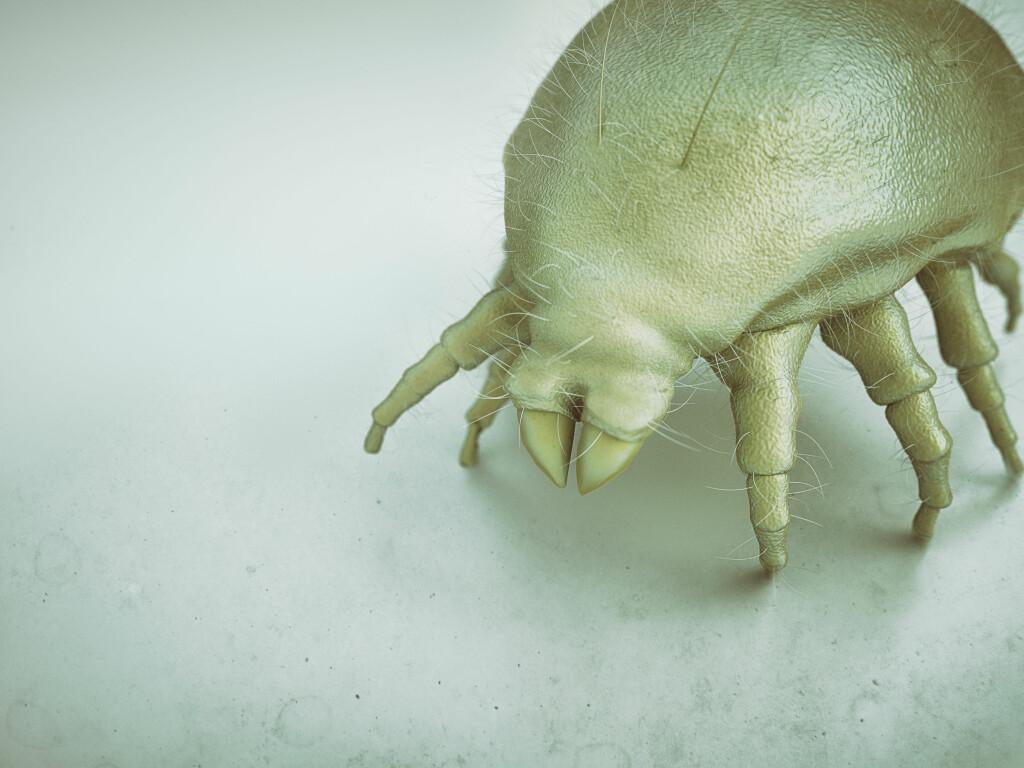 Uhyggelige småkryp: Husstøvmidden er kun 0,2-0,4 mm stor, dermed kan vi ikke se den med det blotte øye. Foto: NTB Scanpix