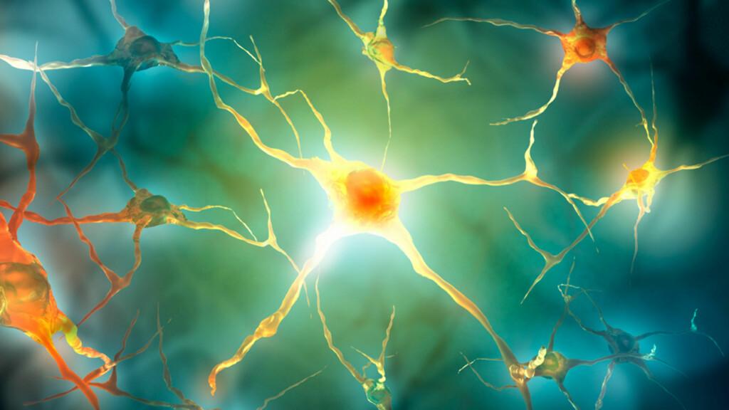 MULTIPPEL SCLEROSE: Normalt går overføring av nerveimpulser lynraskt, men ved MS blir myelinet i nerveceller angrepet, og nervene jobber saktere. Foto: NTB Scanpix/Shutterstock
