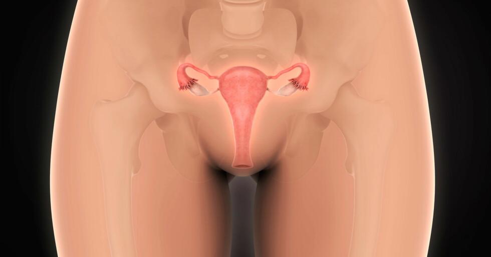 SMERTER VED SAMLEIE: Vestulodyni er en vanlig årsak for smerter under samleie hos kvinner mellom 20 og 40 år. Foto: NTB Scanpix / Shutterstock