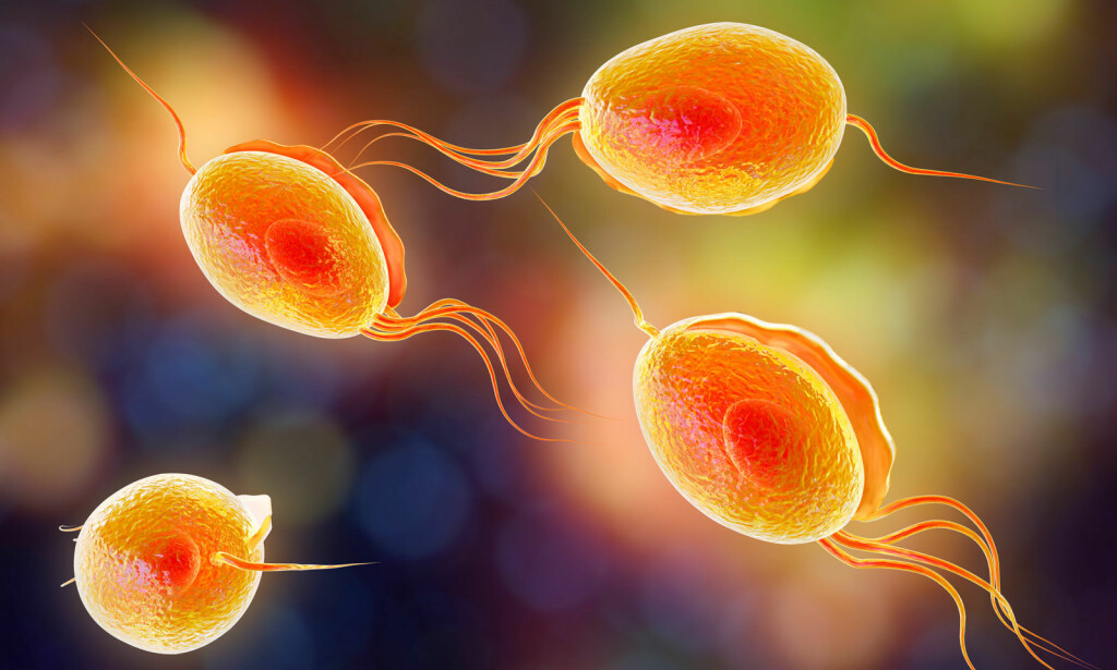 SMITTSOM INFEKSJON: Tricomonas kan gi betennelse i urinrør og skjede. Illustrasjon: NTB Scanpix / Shutterstock