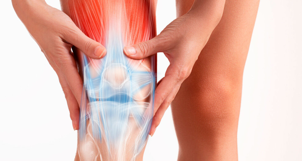 BEVEGELSESAPPARATET: Muskler, skjellett og ledd er organiseringen av vårt bevegelsesapparat. Foto: NTB Scanpix / Shutterstock
