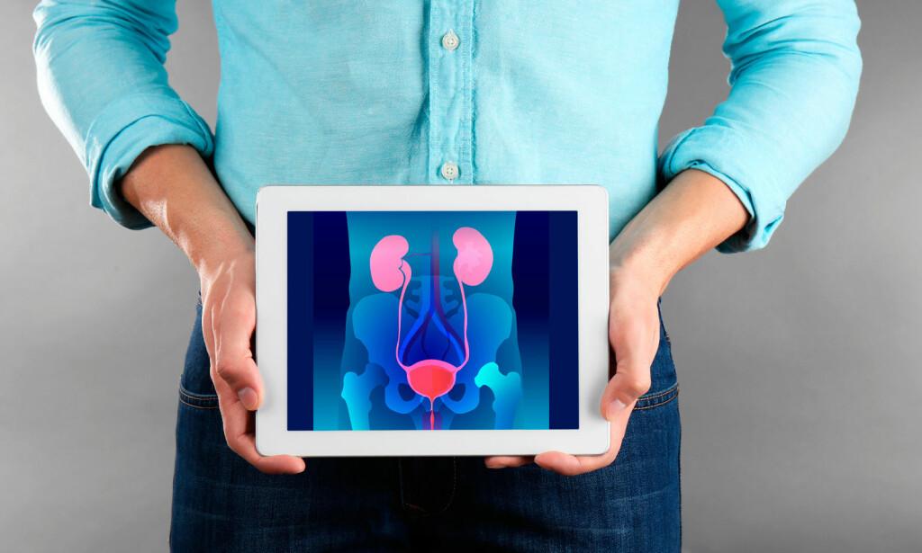 NYRER, BLÆRE OG URINVEIER: Nervesystemet er også involvert i det kompliserte samspillet som skjer når vi tisser. FOTO: NTB Scanpix/Shutterstock