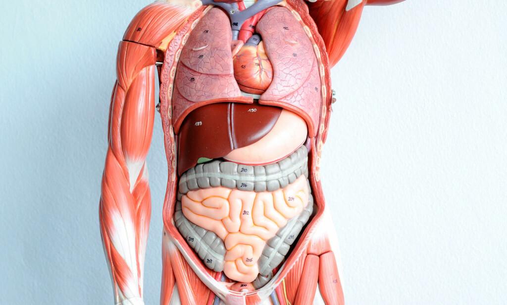 VONDT ØVERST I MAGEN: Den vanligste og realtivt ufarlige årsaken til moderate øvre magesmerter er sure oppstøt og funksjonell dyspepsi. Snakk med legen om stadig tilbakevendende smerter i magen. FOTO: NTB Scanpix/Shutterstock