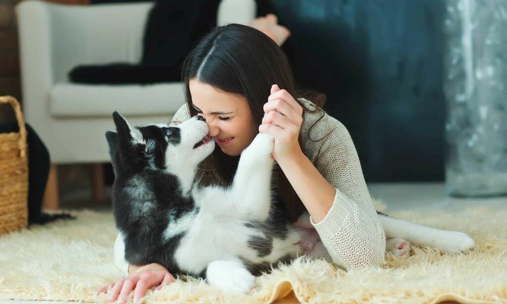 HUNDEBITT: Hvis man får punktering i huden eller det blør kraftig bør lege oppsøkes. (Tilfeldig valgt bilde viser lek med hund) Illustrasjonsfoto: NTB Scanpix/Shutterstock