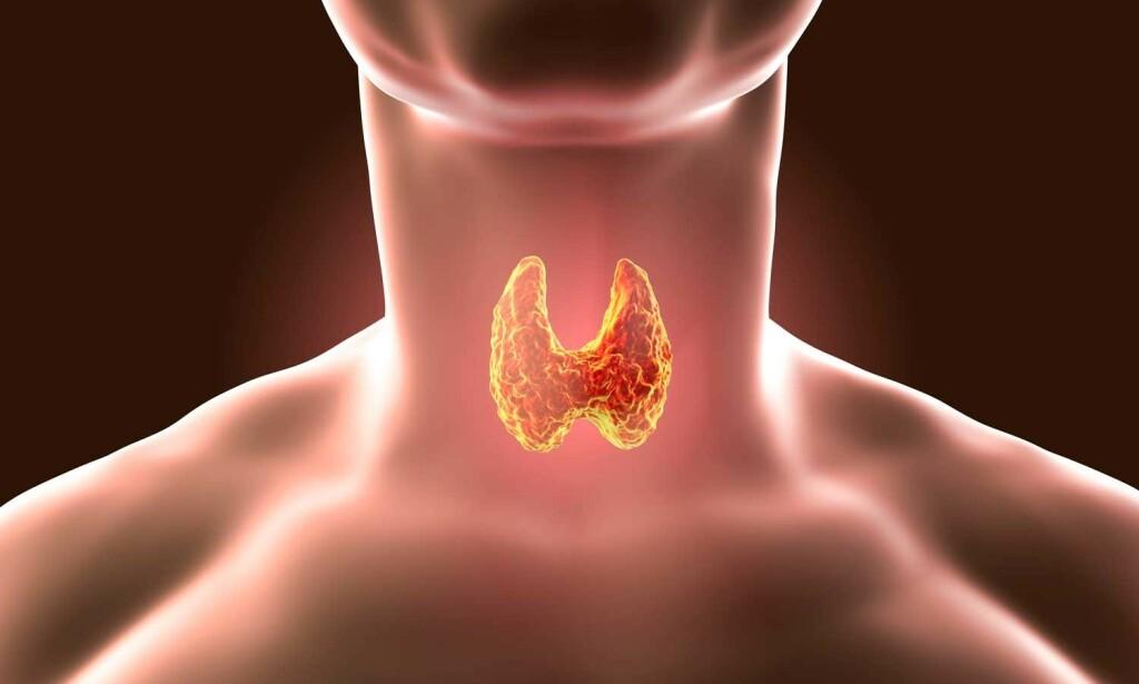 SKJOLDBRUSKKJERTEL: Denne kjertelen er plassert i halsen, og har form som en sommerfugl. Medisinsk illustrasjon: NTB Scanpix/Shutterstock