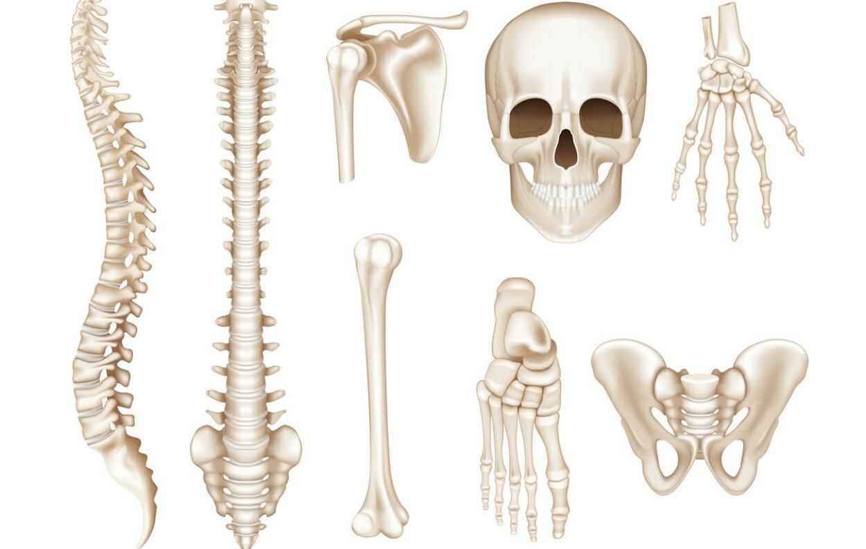 BEININFEKSJON: Hos ungdom er det gjerne de lange rørknoklene i armer og bein som blir rammet. Hos voksne er det oftere ryggvirvler, hofte og føtter. Foto: NTB Scanpix/Shutterstock