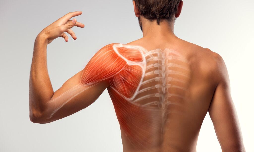 SKULDER: Flere av de vanligste plagene i skulderen kan tolkes som et resultat av den store bevegeligheten i leddet. Foto: Shutterstock / NTB Scanpix