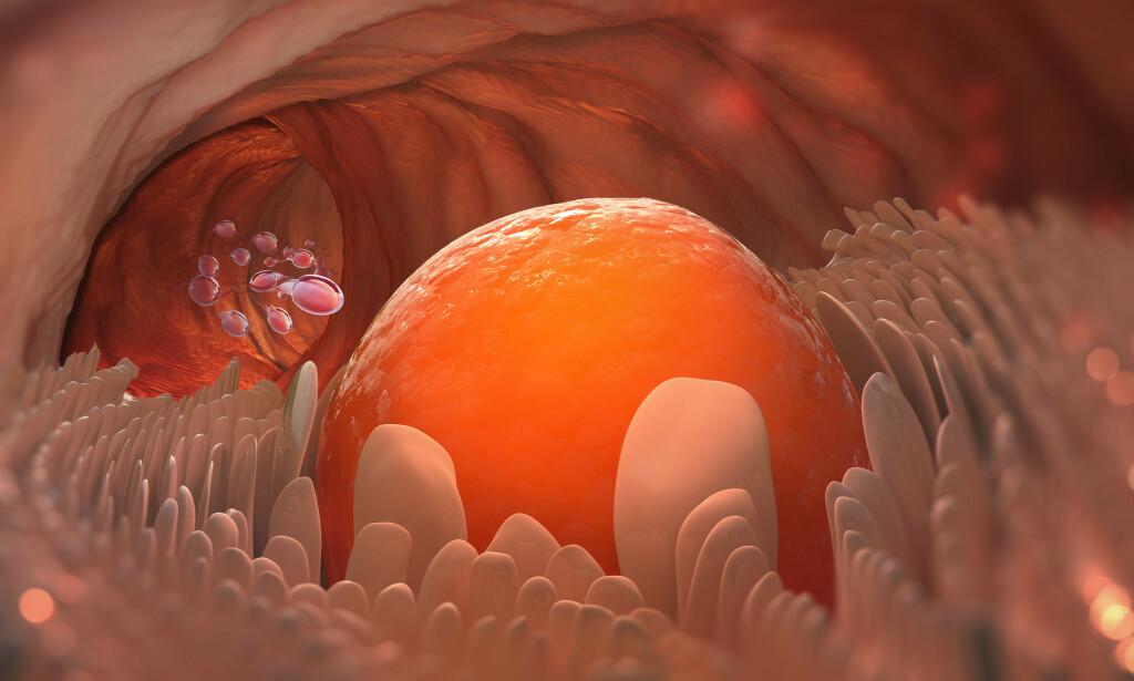 EGGLØSNING: Et egg som forlater eggstokken. Shutterstock / NTB scanpix