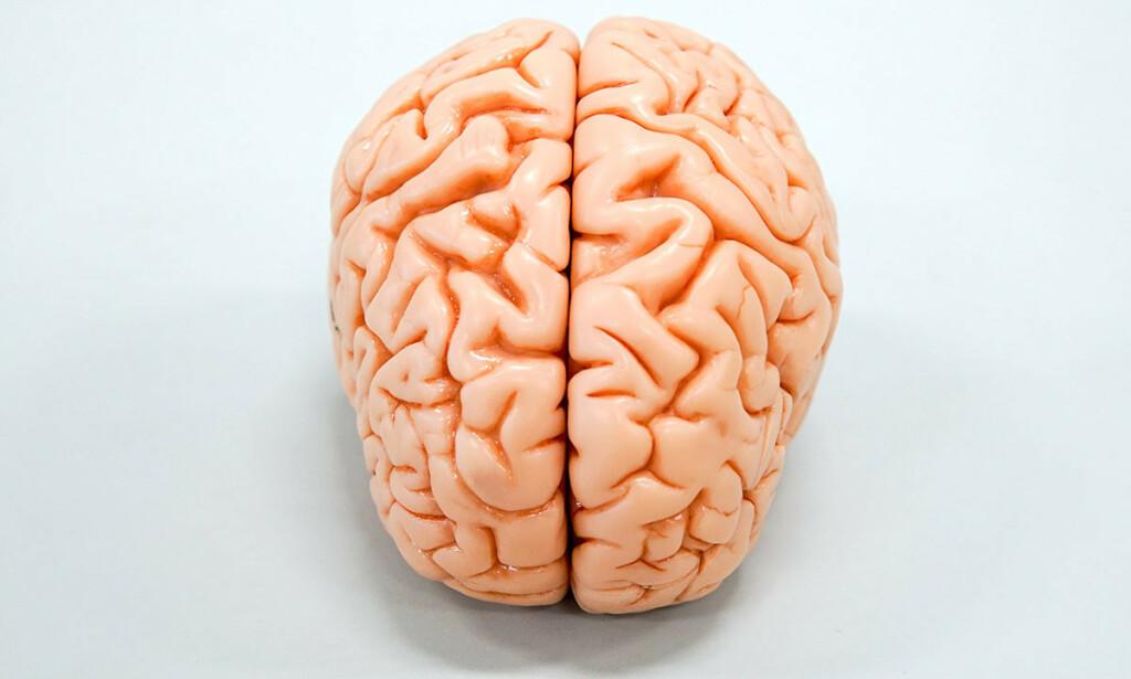 HJERNEN: På denne illustrasjonen ser man tydelig at hjernebarken er delt inn i en venstre og en høyre halvdel. Foto: NETB Scanpix/Shutterstock