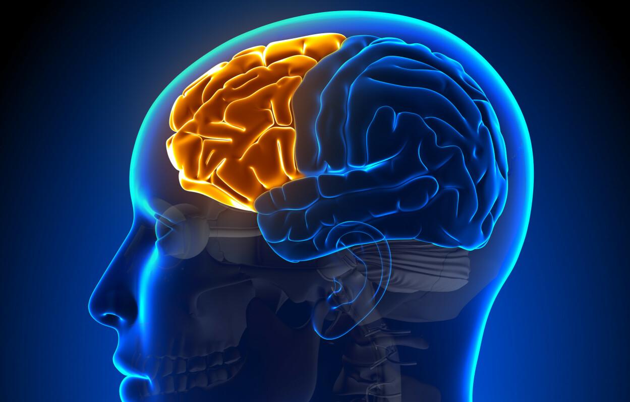 PANNELAPPEN: Frontallappen kalles også pannelappen, og er den hjernelappen som ligger lengst frem i hodet. Foto: Shutterstock/NTB