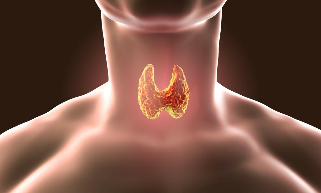 SKJOLDBRUSKKJERTELEN: Skjoldbruskkjertelen er lokalisert på halsen og produserer hormoner som er helt nødvendige for vårt stoffskifte. Foto: Kateryna Kon / Shutterstock / NTB