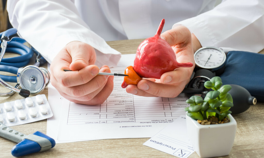 PROSTATA: Bildet viser en modell av prostata og blæren. På bildet peker man på prostata som er beliggende under urinblæren. Foto: Shidlovski / Shutterstock / NTB