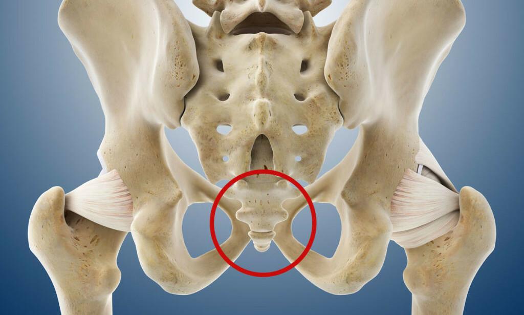 HALEBEINET: Plassert nedenfor ryggraden. Du kjenner beinet som regel når du sitter eller ligger på ryggen på hardt underlag. Foto: NTB Scanpix/Science Photo Library